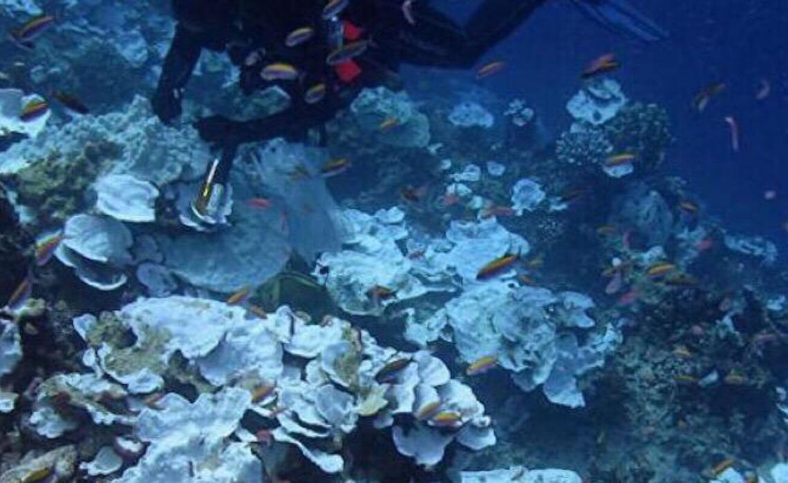 Descoberta grande quantidade de metal altamente tóxico no fundo do oceano Pacífico