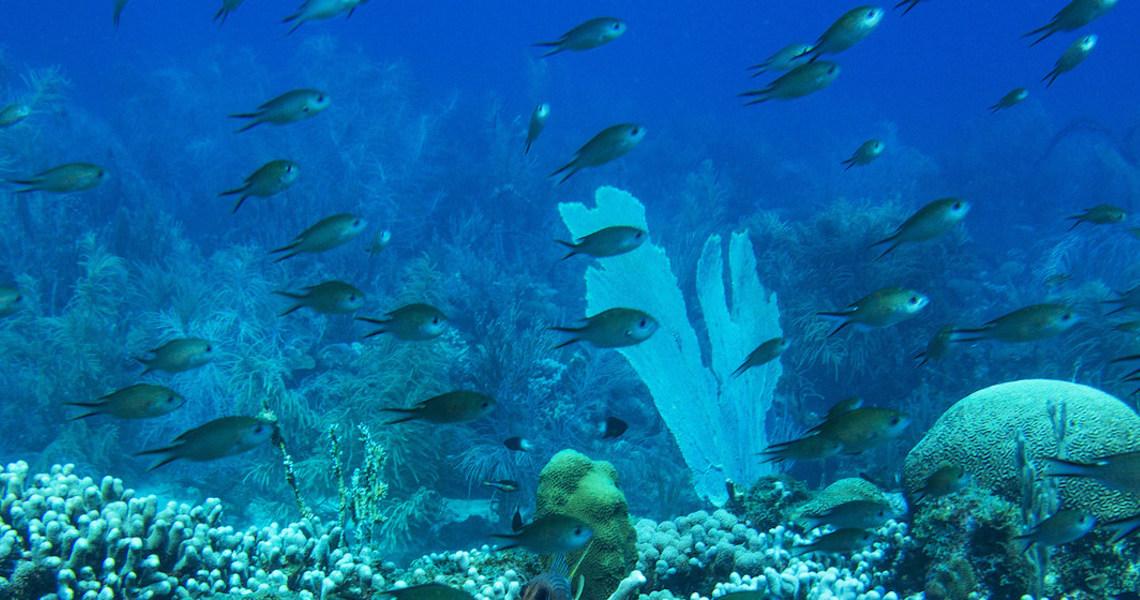 Portugal confirma Conferência dos Oceanos para junho de 2022