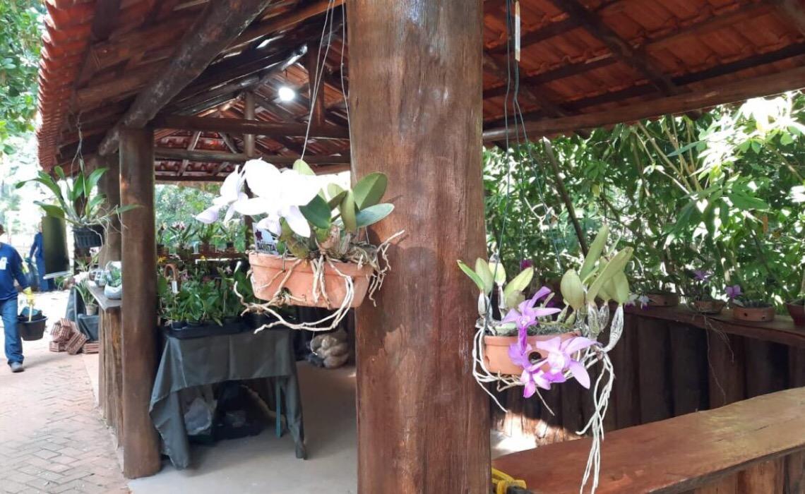 Jardim Botânico de Brasília retoma quiosque de venda de flores
