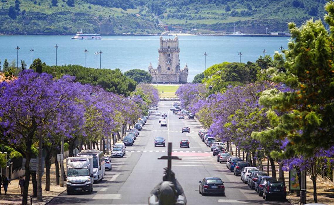 Flor tupiniquim na Europa: como beleza de jacarandás conquistou Portugal?