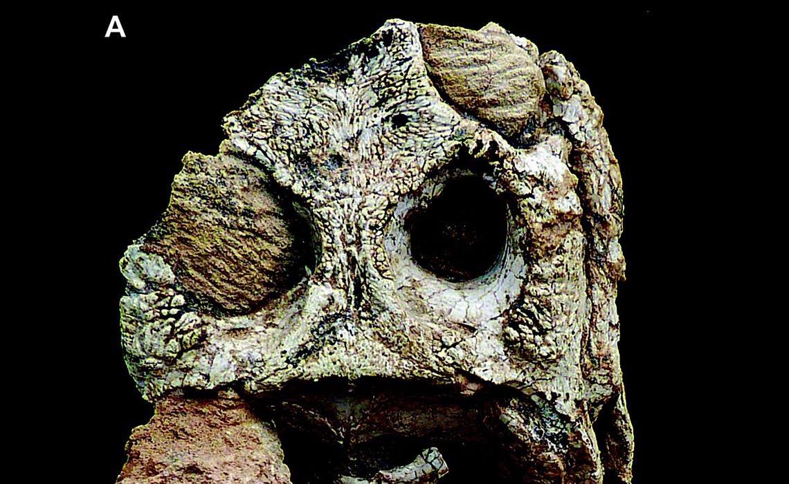 Acervo da Uerj ganha dois fósseis de nova espécie de crocodiliformes