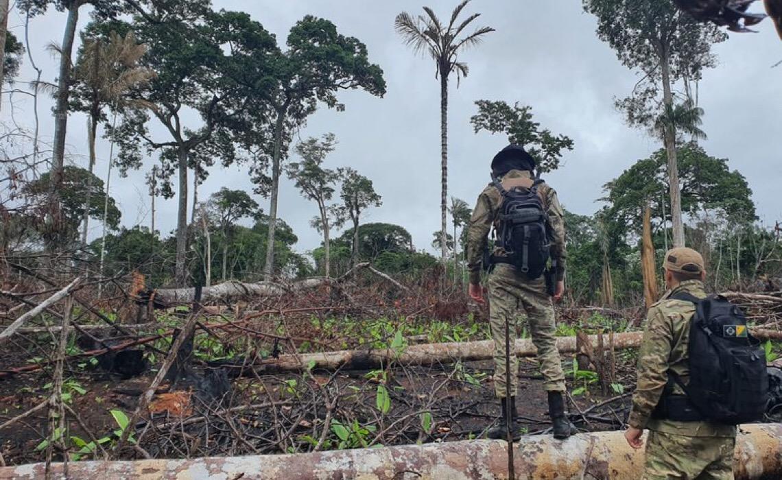 PF apreendeu mais madeira ilegal em cinco meses de 2021 do que em 2018, 2019 e 2020