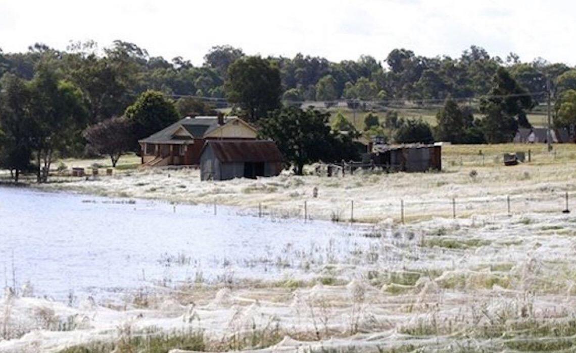Imagens 'apocalípticas' mostram teias de aranha cobrindo vastas áreas da Austrália após inundações