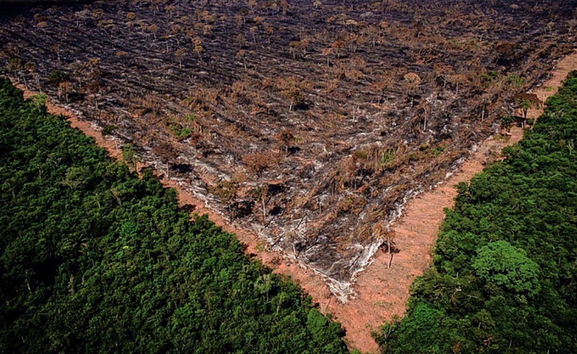 BNDES injeta recorde de dinheiro em empresas ligadas ao desmatamento