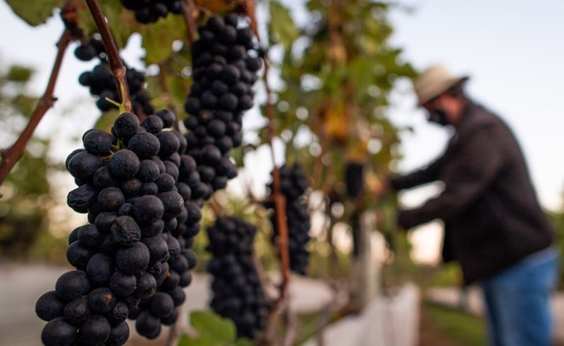 FAP-DF investe em pesquisa sobre produção de vinho