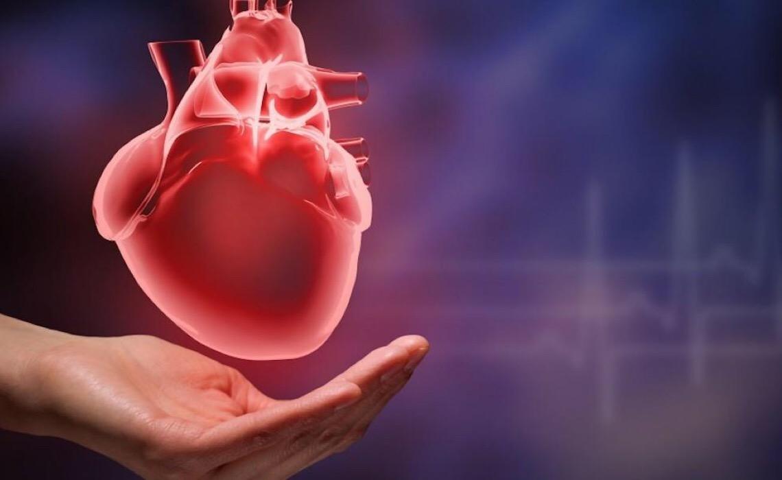 Cientistas usam cavalos e ratos para desvendar motivo de atletas de elite poderem sofrer bloqueios cardíacos