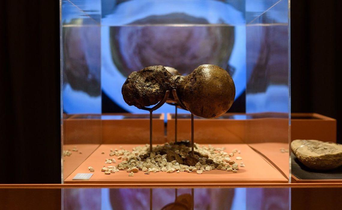 Exposição na Fiesp apresenta o mundo de Charles Darwin