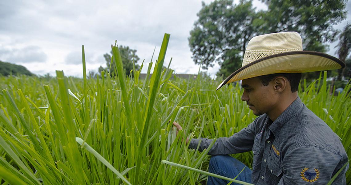 Cooperativa do Cerrado ganha prêmio da ONU com iniciativa sobre biodiversidade