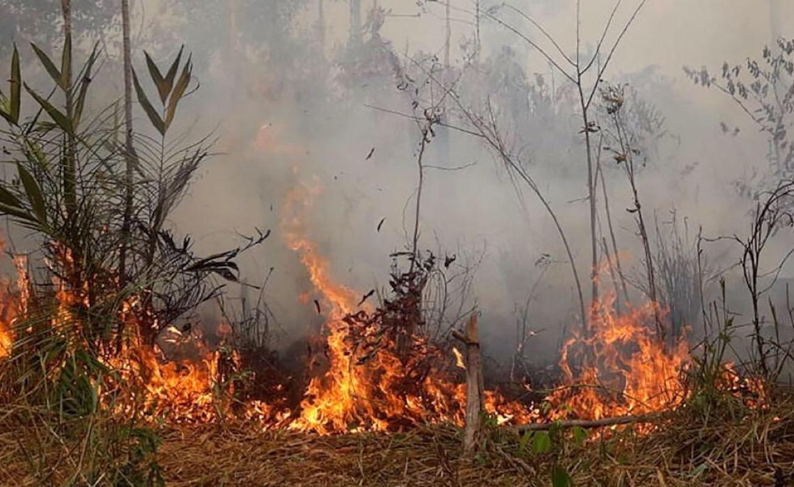 OMM destaca estudo sobre declínio na captura de carbono na Amazônia