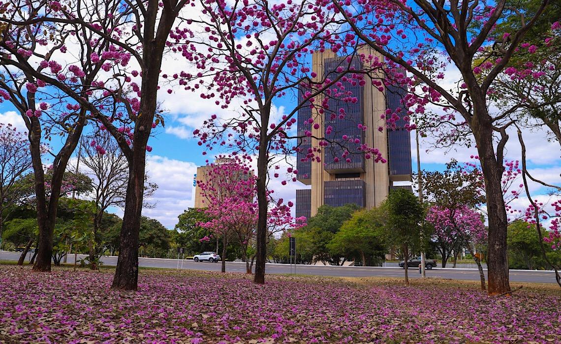 Corridas de rua alteram trânsito na área central de Brasília