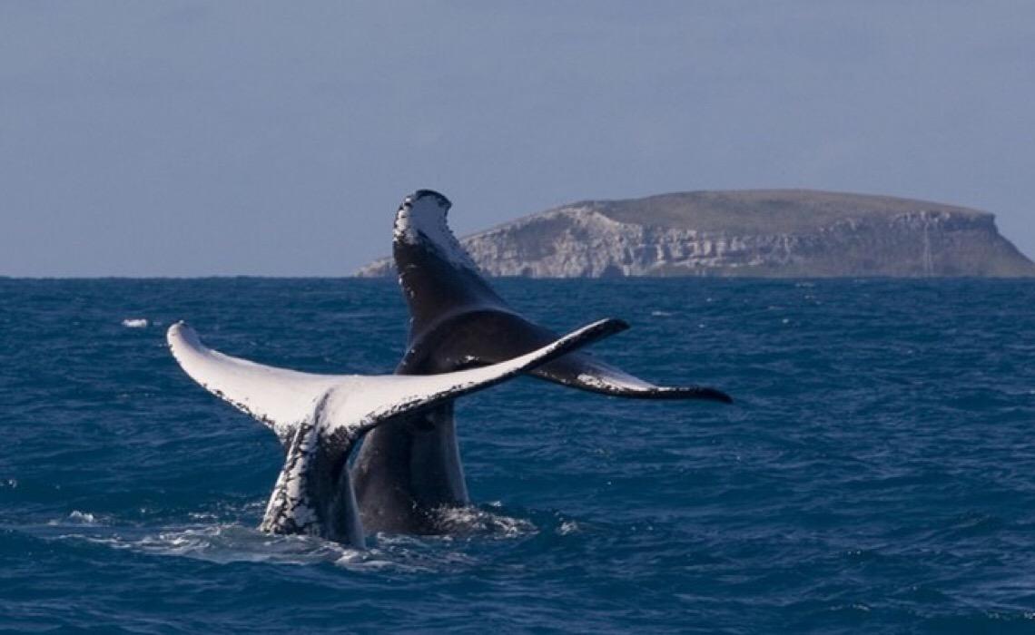 Turismo de observação de baleias tem início no Brasil