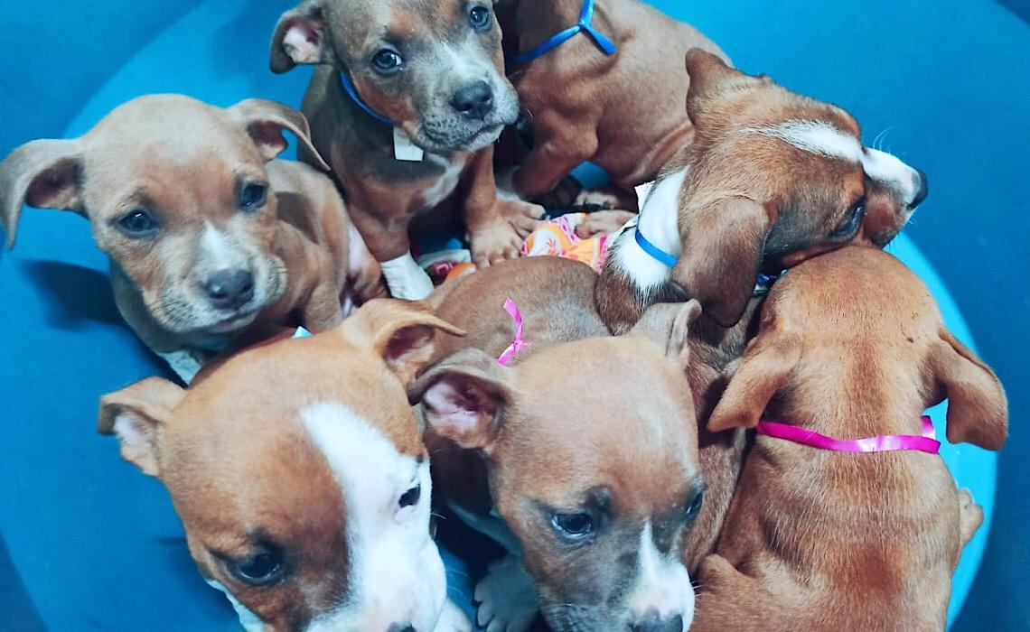 Distrito Federal tem mais uma clínica parceira para castrar cães e gatos
