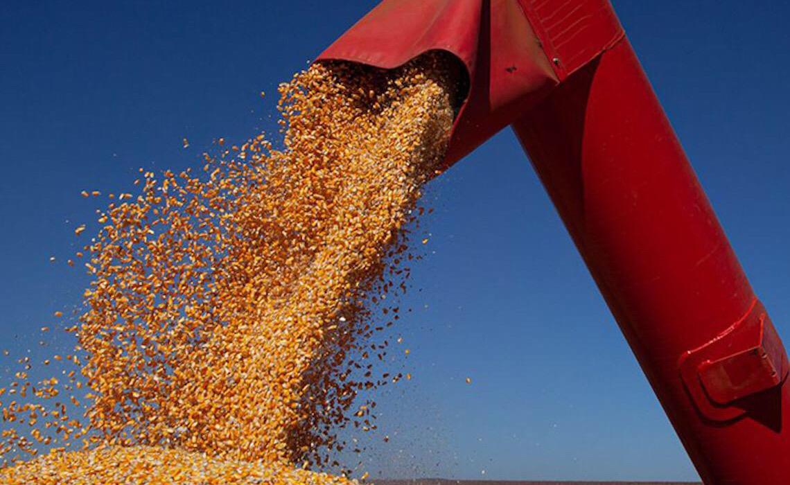 Clima adverso reduz previsão da colheita brasileira 2020/2021
