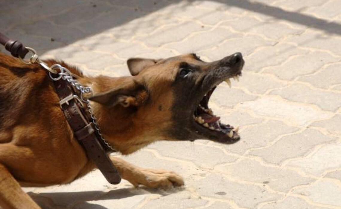 Proprietário de animal deve indenizar criança que sofreu ataque