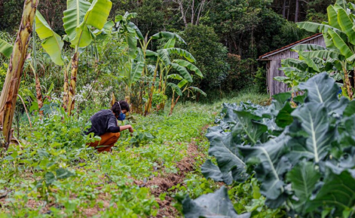 'Agricultor brasileiro tem conhecimento, falta é assistência' diz analista sobre geadas e secas