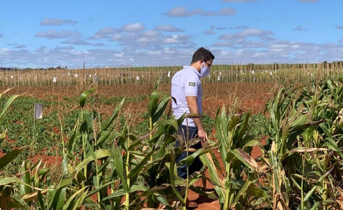 Inovação no controle de pragas e doenças nos vegetais do Distrito Federal