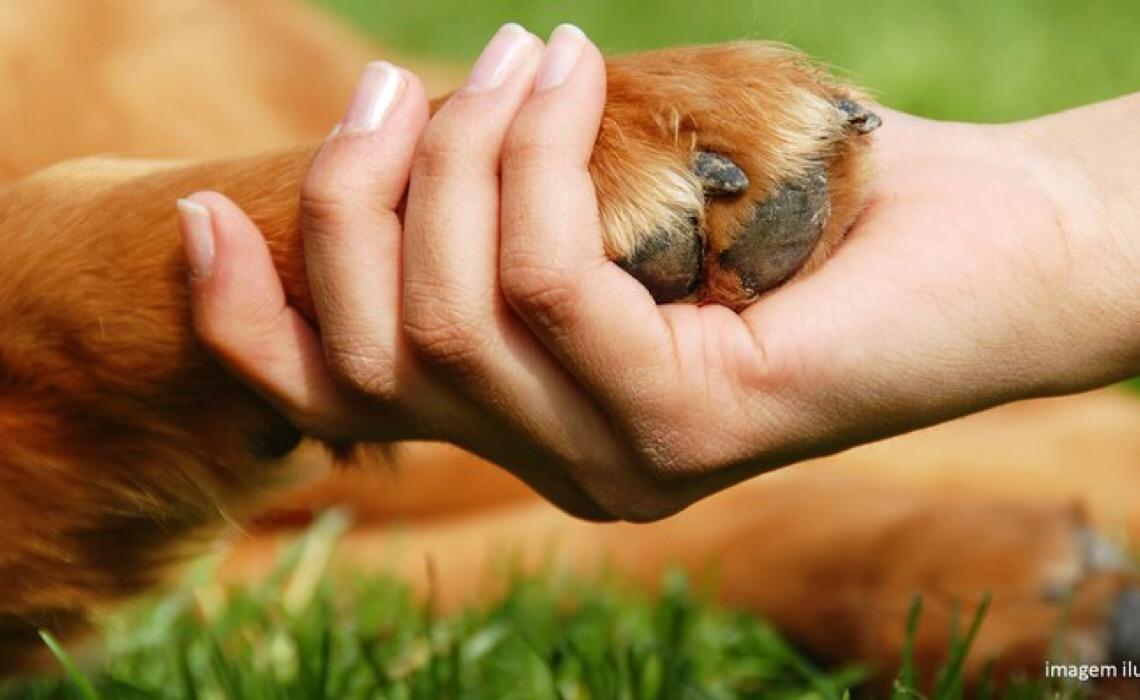 Dono de cão que morreu devido a cruzamento inapropriado deve ser indenizado