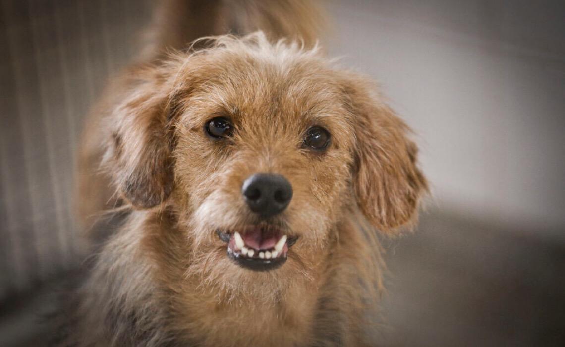 Abra seu lar e coração para adotar cães e gatos da Zoonoses