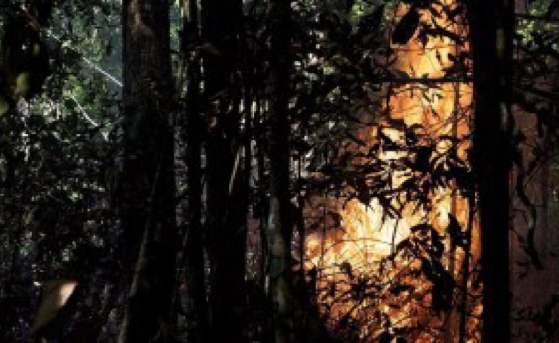 Queimadas já afetaram 95% das espécies da Amazônia