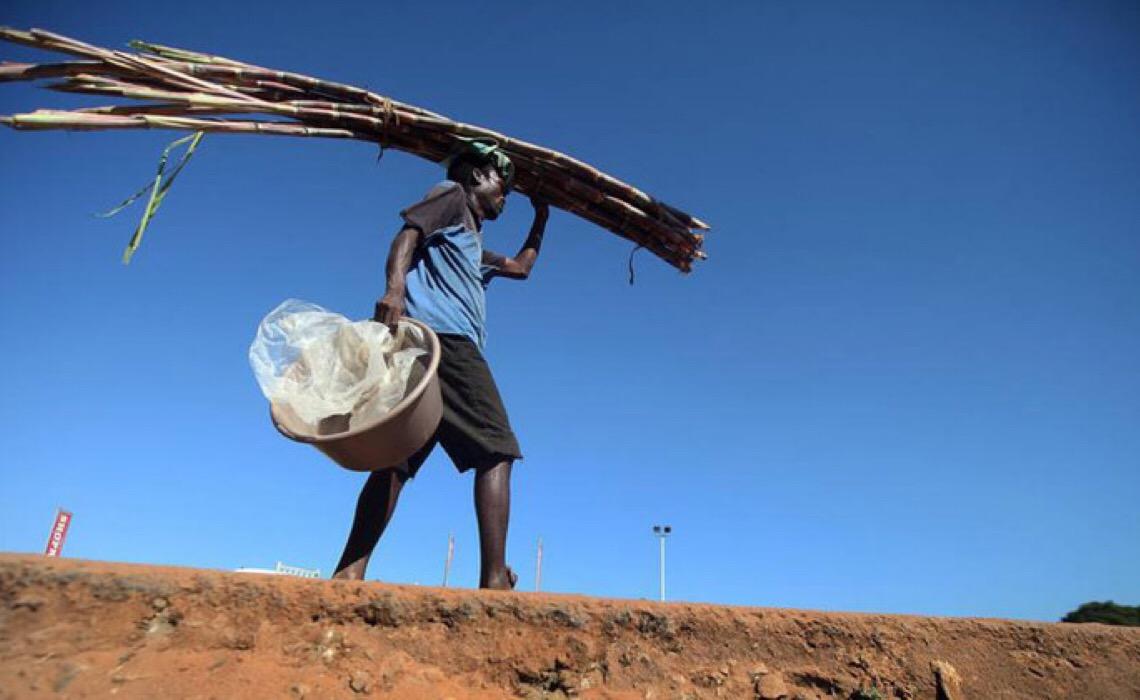 Geadas em plantações de cana no Brasil impulsionam alta global no preço do açúcar