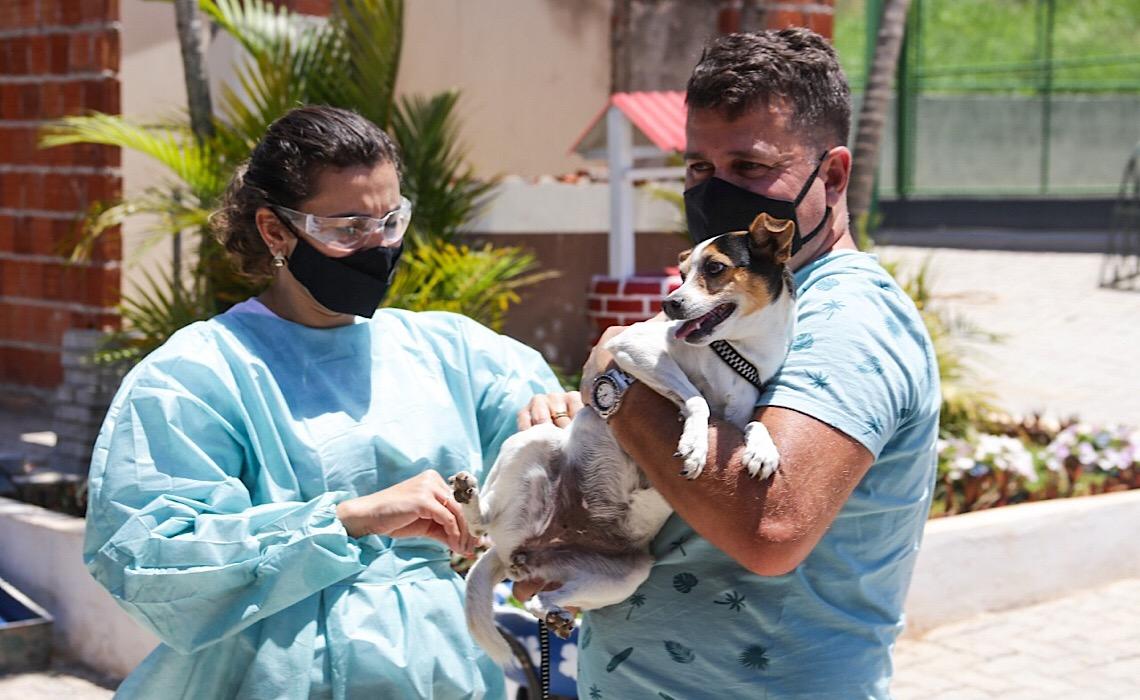 Saiba onde imunizar cães e gatos contra a raiva entre os dias 6 e 11 de setembro