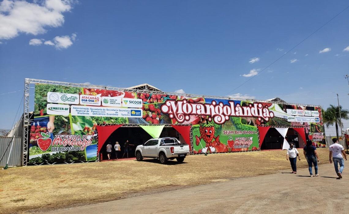 Morangolândia tem 40 estandes de produtores de morango do Distrito Federal