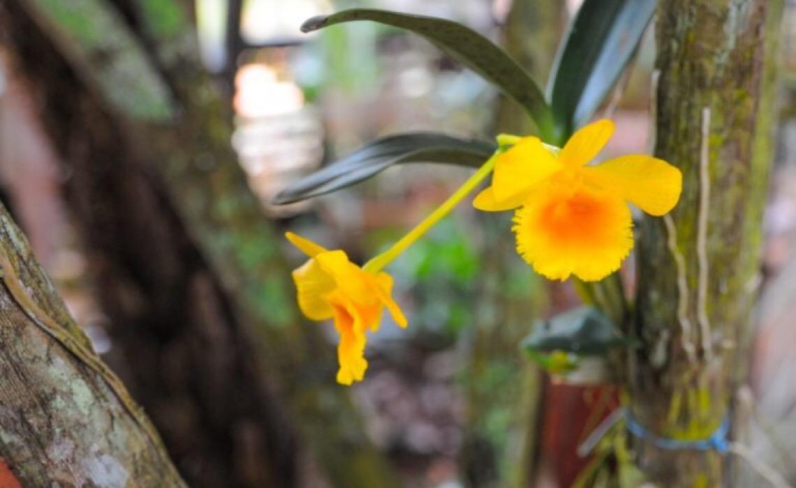 Oficina gratuita de cuidados com orquídeas e confecção de kokedamas