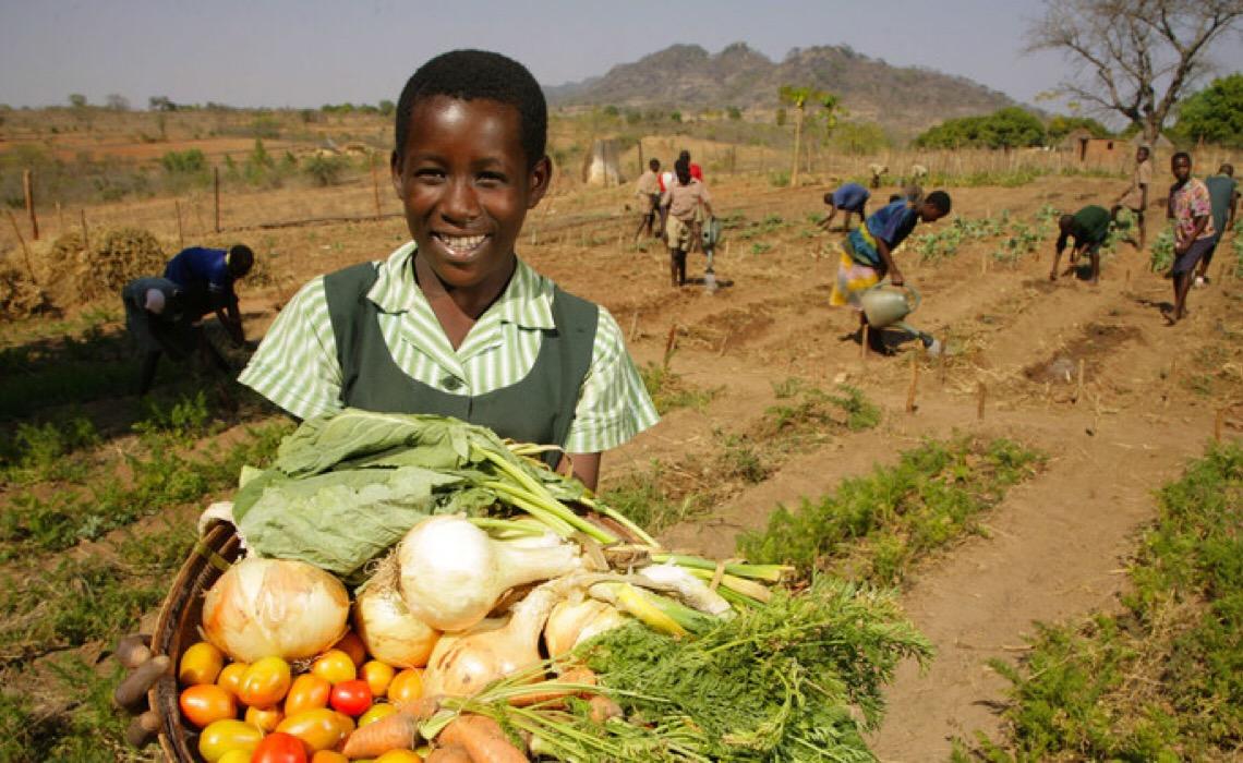 Brasil apoia parceria que leva soluções sustentáveis para a agricultura no Zimbábue