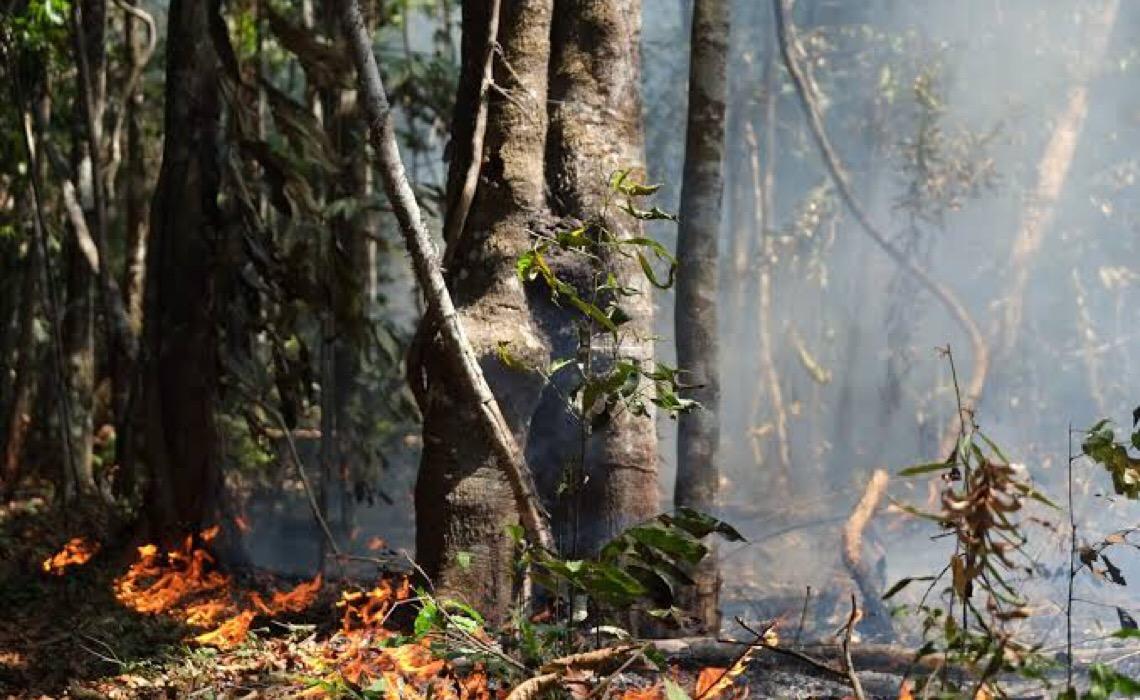 Desmatamento é ameaça econômica para o Brasil, diz relatório de organização britânica