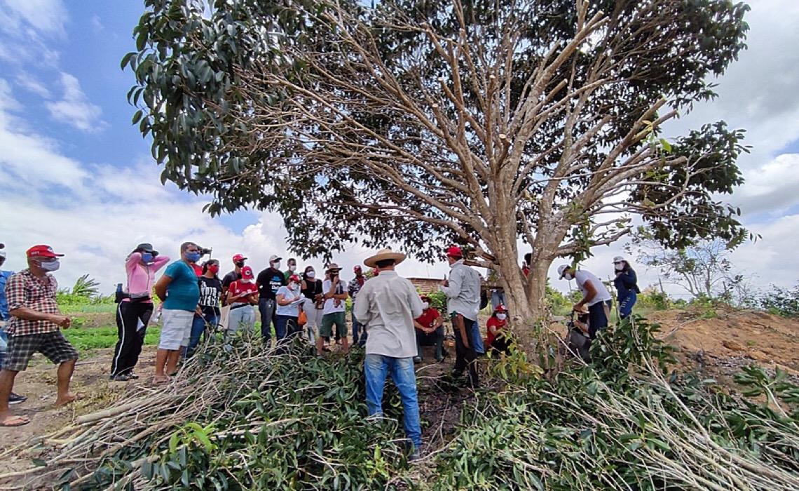 Agricultores aprendem como aplicar sistemas agroflorestais em assentamentos de Pernambuco