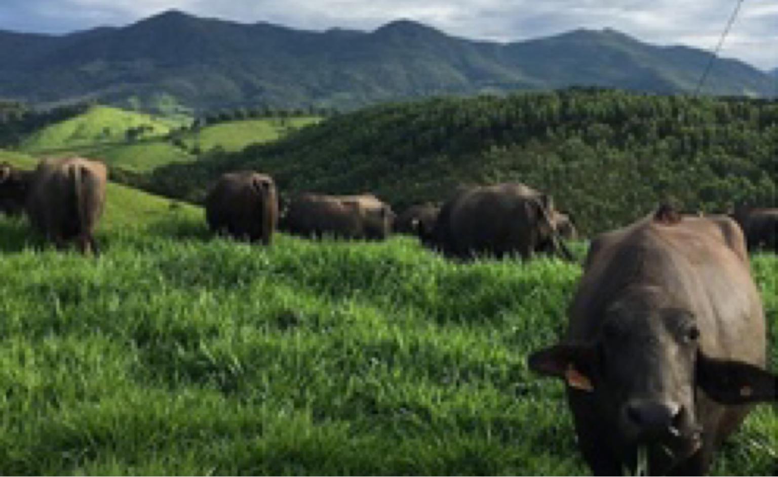 Experiências do Brasil Rural: As virtudes da Rota Gourmet das Terras Altas da Mantiqueira