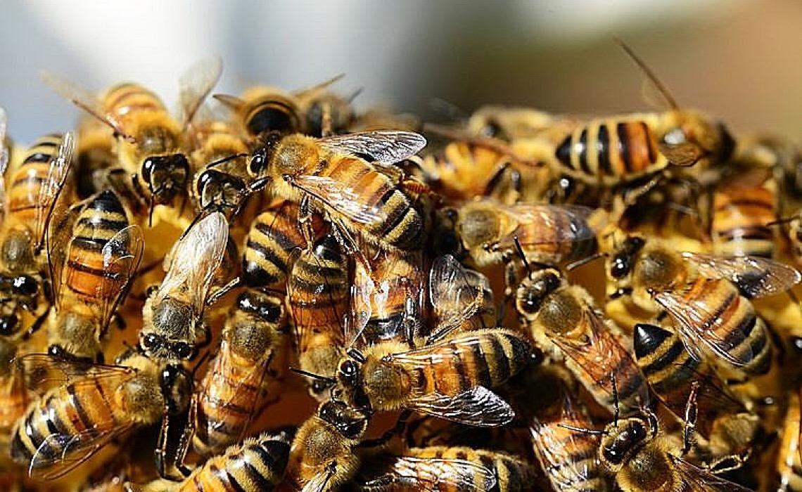Como Santa Catarina se tornou o primeiro estado a restringir agrotóxico que extermina abelhas