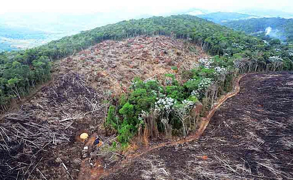 Perda de cobertura vegetal na Amazônia em 36 anos equivale a área do Chile, mostra levantamento