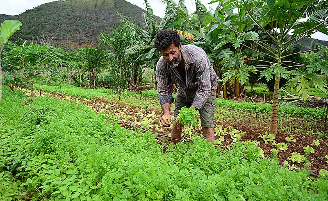 Pequeno agricultor distribui alimentos, mas não tem acesso a dieta saudável, critica ONU
