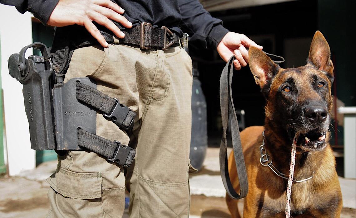 Homenagem aos cães que atuam junto às forças de segurança