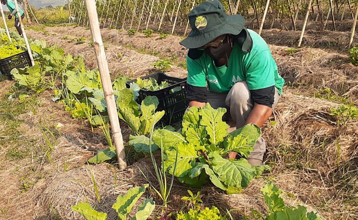 Por que agricultores e pesquisadores defendem que agroecologia pode sanar a fome no Brasil