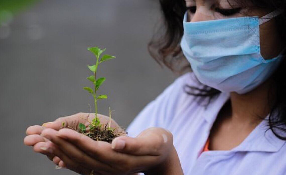 Trigg e Assobio incentivam a doação de cashback para o reflorestamento