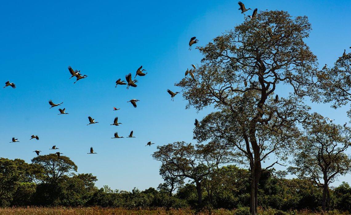 Seca histórica no Pantanal provoca maior vazante em 121 anos