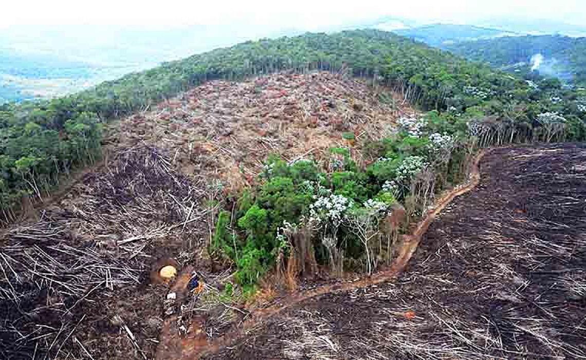 Projeto dos EUA para reduzir impacto do desmatamento pode afetar exportações do Brasil?