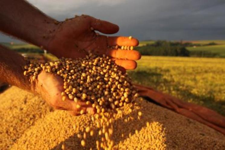 Setor da soja no MS corre para liberar armazéns e garantir o escoamento da produção