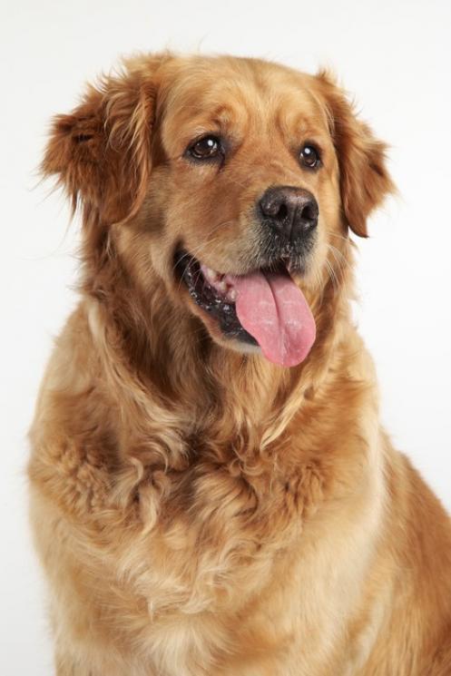 Seu cachorro já pode assistir TV com um conteúdo voltado só para cães