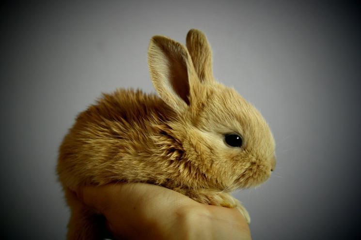 Que tal um coelho de estimação