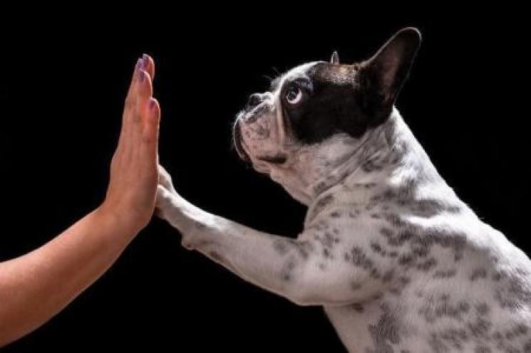Ensine seu cão a obedecer o comando de levantar