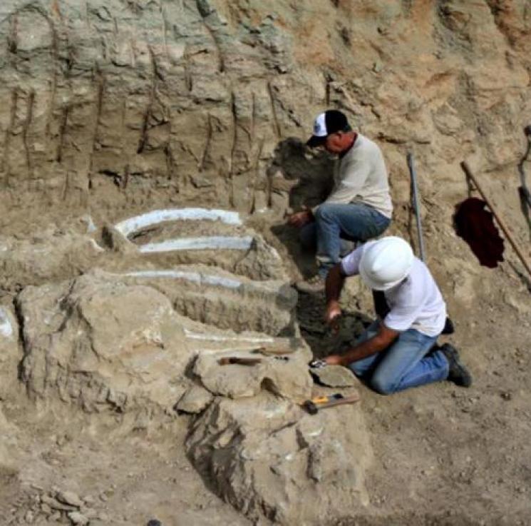 Cidade mineira mapeia fósseis de dinossauros para virar patrimônio mundial