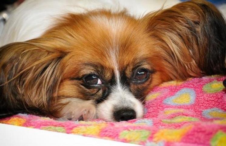 Doenças transmissíveis entre pets e humano; quais cuidados você deve tomar