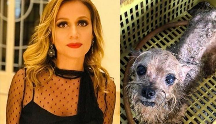 Luisa Mell resgata cães mantidos em cativeiro dentro de armários e gavetas