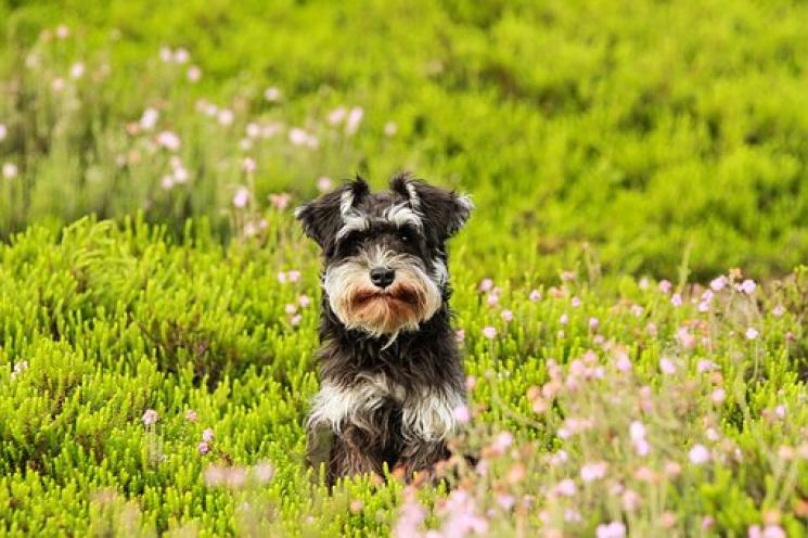 16 Plantas facilmente encontradas em jardins que são tóxicas para o seu cachorro