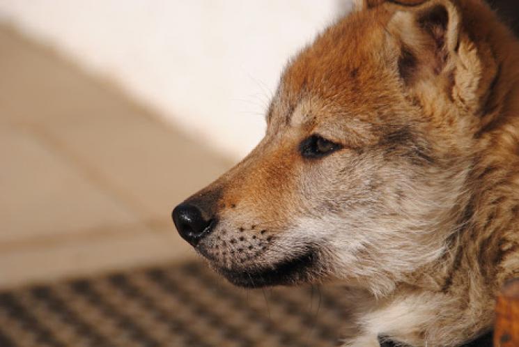 Os nossos cães são seres muito queridos a vida toda, não há dúvida disso