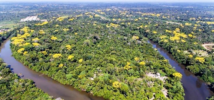 Petrobras abre inscrições para apoiar projetos de proteção ambiental