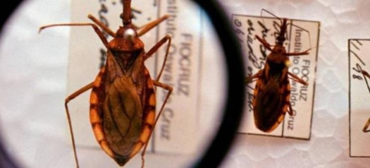 Profissionais de saúde sabem pouco sobre Doença de Chagas, diz estudo